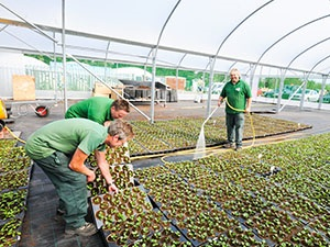 9409 - Tending Plants at Riverway Nursery